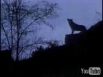 Danças com Lobos